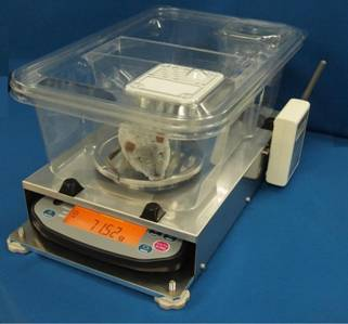 Automatic scale for animals(AD-1642A for mice)